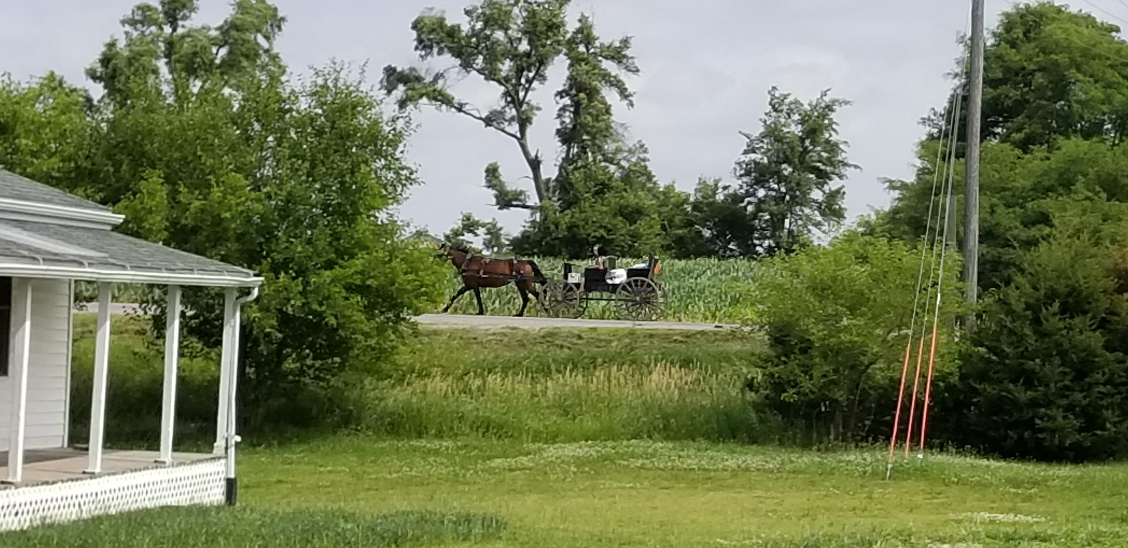An Amish buggy drives down a road, led by two horses.