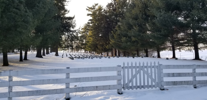 The East Amana cemetery, surrounded by evergreens.